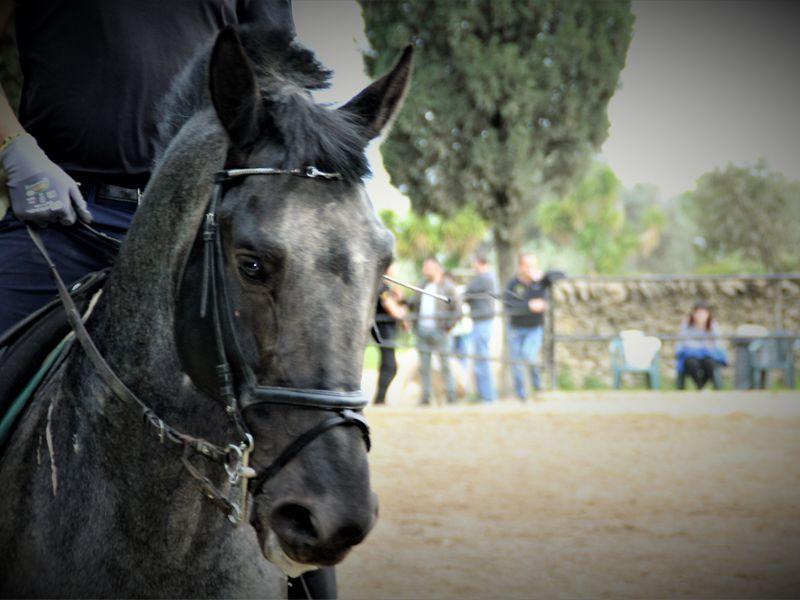 Offerta corsi di formazione equestre - Promozione passeggiate a cavallo Puglia