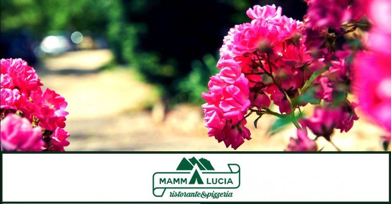 offerta camping vicino lago di Garda - occasione campeggio con animali domestici San Zeno