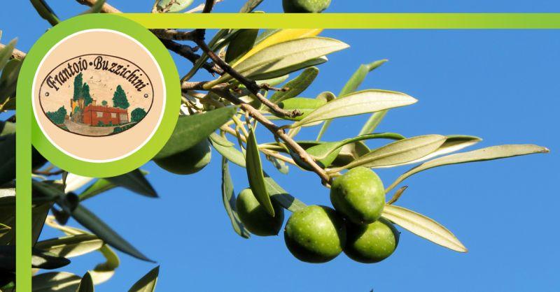 FRANTOIO BUZZICHINI - offerta vendita olio extravergine di oliva citta di castello