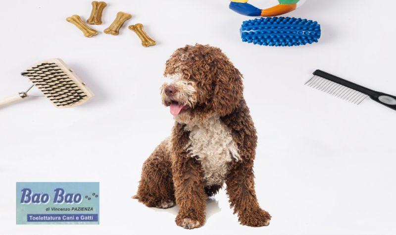 Offerta toelettatura professionale foggia - promozione toeletta per cane e gatto foggia