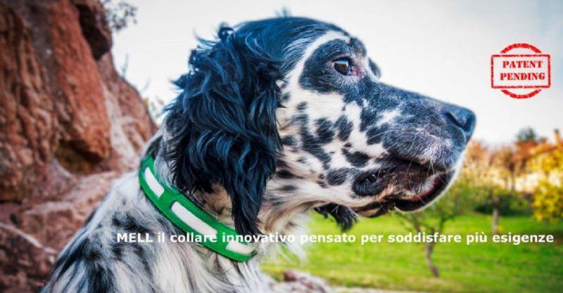 promozione articoli e prodotti per animali Siena - occasione articoli sanitari per cani Siena
