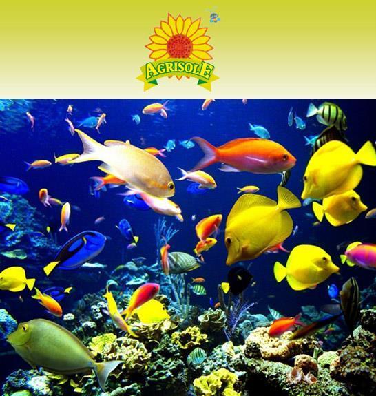 Acquari e pesci